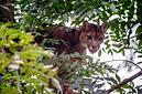 ANS1236 lr Parc des Felins 2012 puma