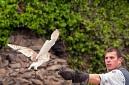ANS5107 lr La volerie des aigles
