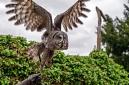 ANS5162 lr La volerie des aigles