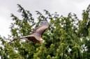 ANS5305 lr La volerie des aigles