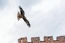 ANS5316 lr La volerie des aigles