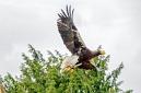 ANS5389 lr La volerie des aigles