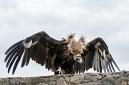ANS5406 lr La volerie des aigles
