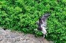ANS5417 lr La volerie des aigles