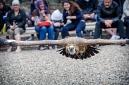 ANS5432 lr La volerie des aigles