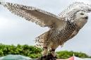 ANS5481 lr La volerie des aigles