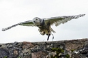 ANS5489 lr La volerie des aigles