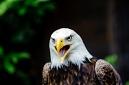 ANS5576 lr La volerie des aigles