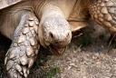 tortue de floride (Nature Zoo Mervent)