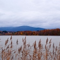 lac du Malsaucy automne 2010||<img src=_data/i/galleries/stock_animalier_et_qq_paysages/_DSF2282_LRbdef-th.jpg>