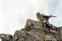 ANS0305 lr les aigles des remparts 2012